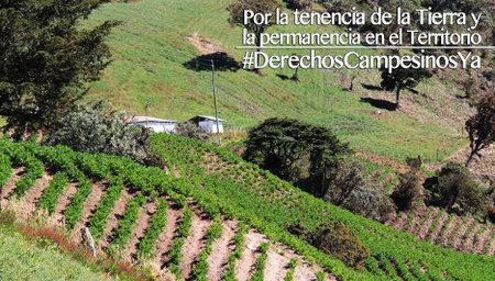 2014_Tierra2Color-DDCC